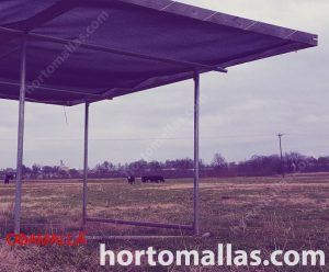 grazing field with shade structure for cows
