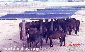 refugio solar para caballos