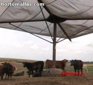 cattle protected with shade net