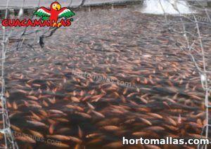 lago con peces protegido con red anti pajaros