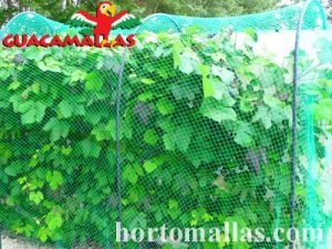bird protection netting over horticulture plants