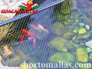 anti bird pond netting protecting fish in a home pond