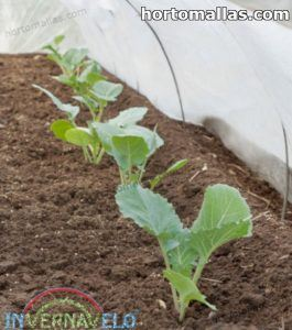 crops protected with insecr barrier