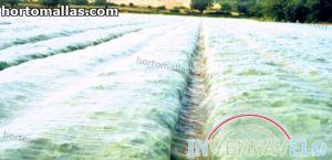 frost fabric protecting cropfield
