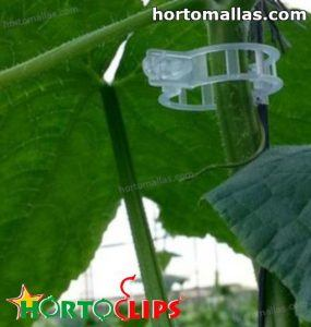 ring used in support system to tomato plant