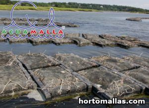 Oyster bags cultivation
