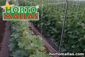 cucumber trellis net