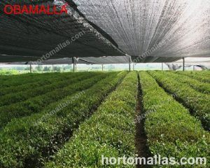 casa sombra en cultivos de hortalizas