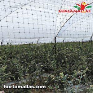 aviary net instelled on greenhouse