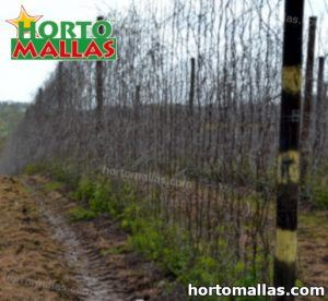 hops used trellis net on vertical