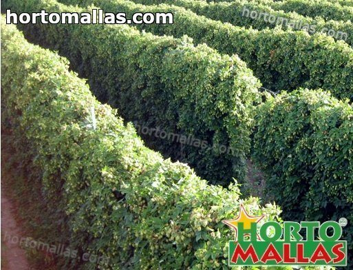 How to Make and Maintain Trellises for Hops and Other Fast Growers on Trellises