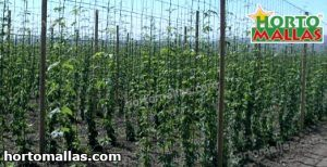 hops crops using hortomallas support net
