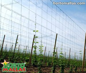 trellis net installed on vertical in hops cropfield