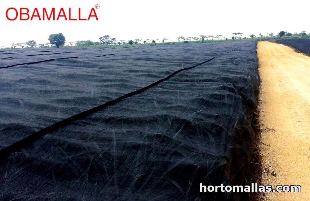 Malla sombra en la agricultura de piña protegida.