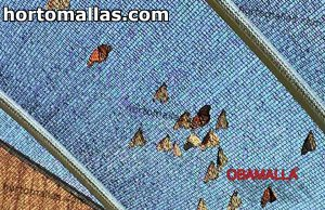 Butterfly house netting