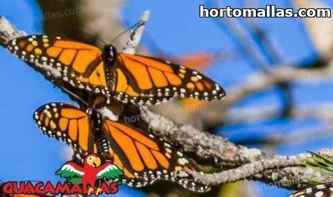Protecting Your Crops with Butterfly House Netting