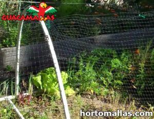 bird net used for protect plants against bird attack