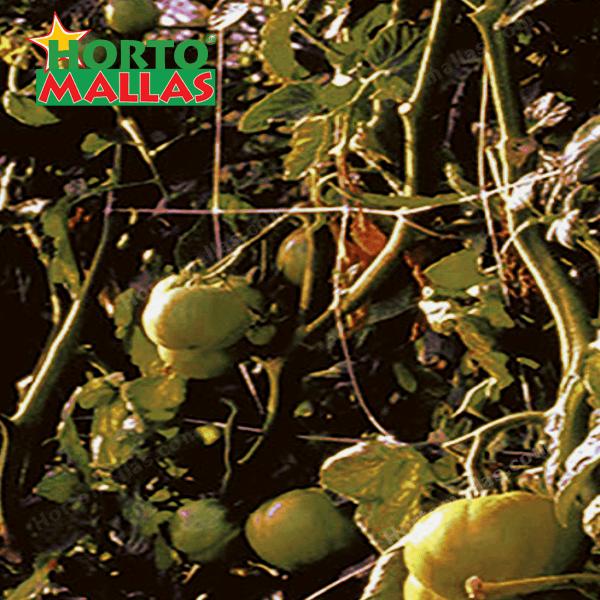 entutorado de tomates disminuye los agentes fitopatogenos de tu cultivo con malla para tutoreo