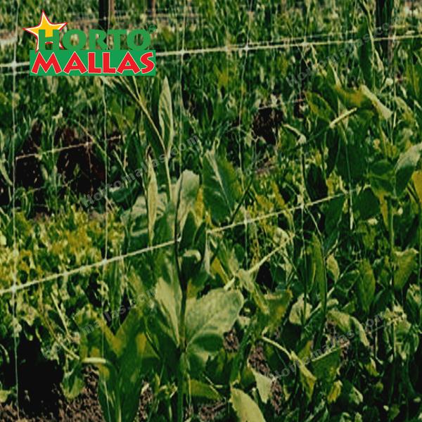 Mejora la calidad de tus cultivos con uso de malla espaldera.