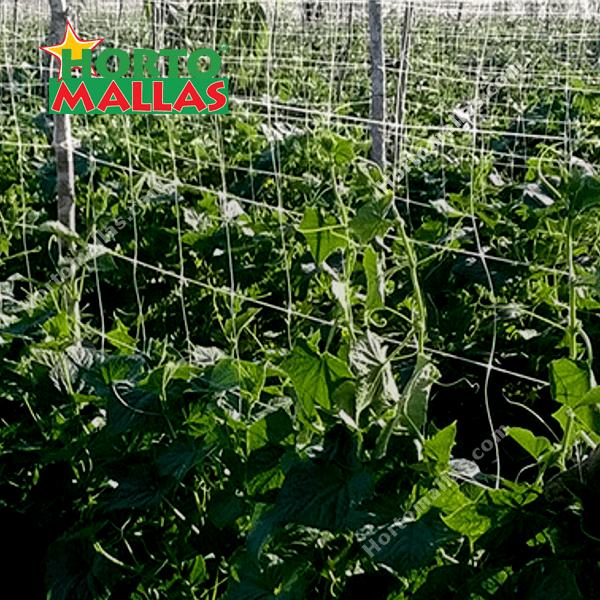 Cultivo de hortalizas con malla espaldera