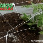 Effects of tomato raffia twine trellis