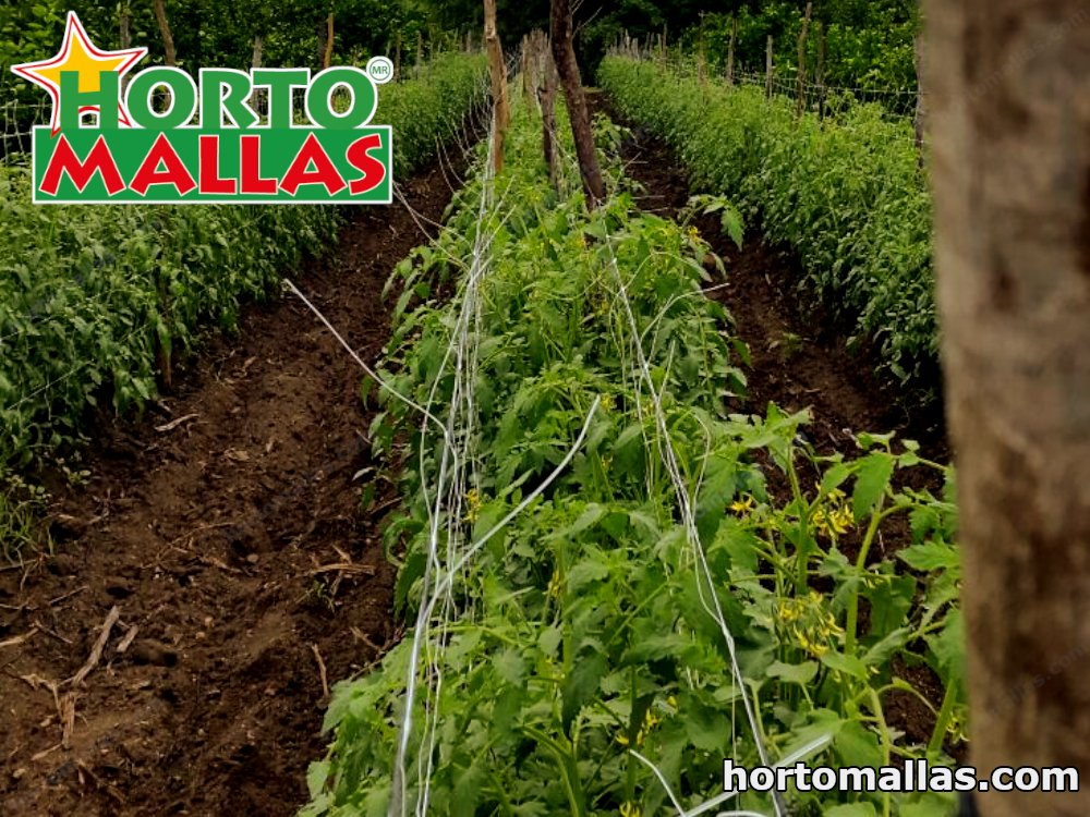 trellis net installed on vertical on plants crops