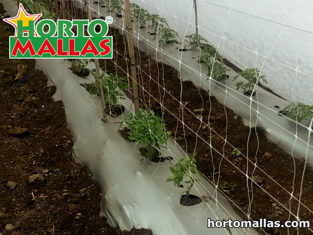tomato net