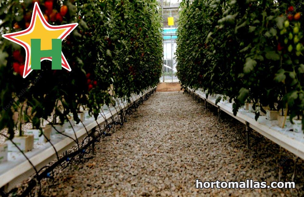 Hydroponic tomato systems