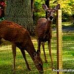 keep deers away