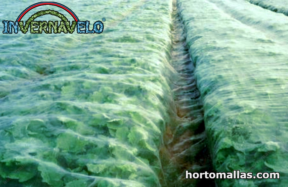 floating row covers on crops