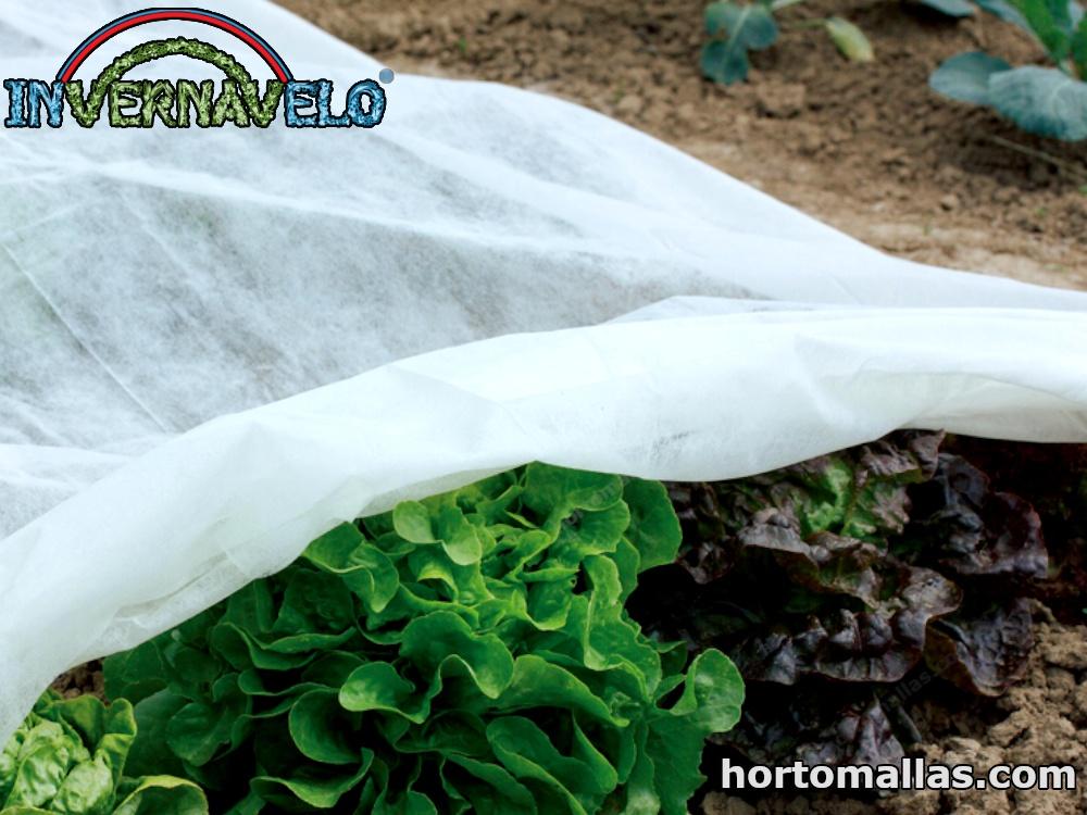 La Manta Térmica Agrícola para protección de cultivo.