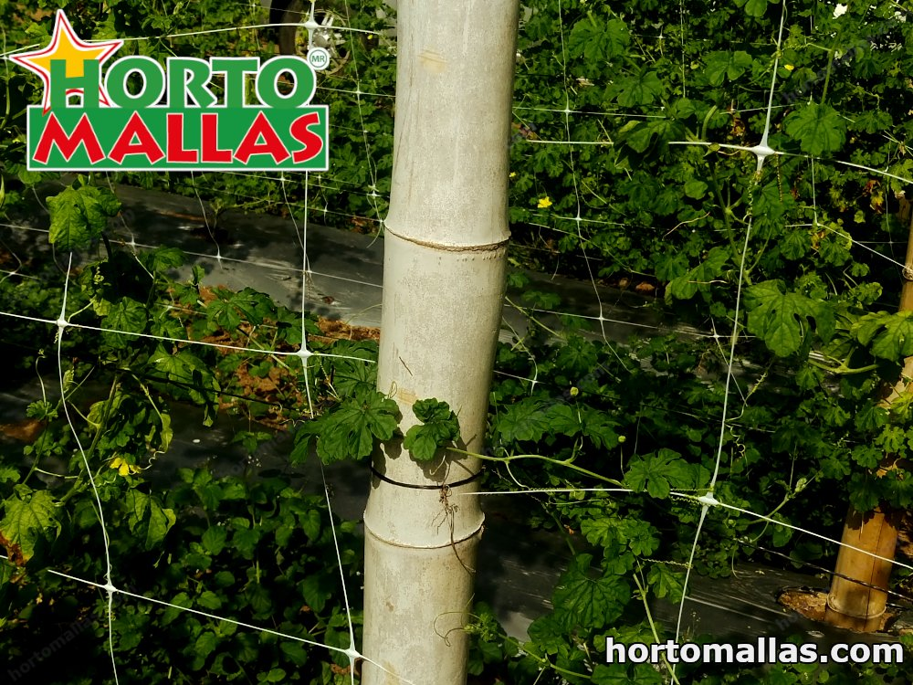 hortomallas vertical net installed on vertical for plant support