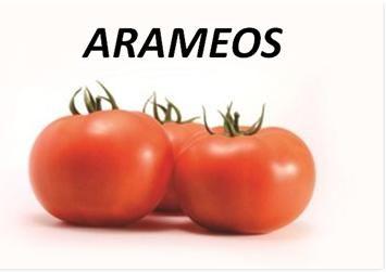 Arameo Para quem procura quantidade e qualidade, variedade de tomates redondos de primeira categoria. Excelente equilíbrio vegetativo, vigor médio-forte, para ciclos médios a longos, tolerante a períodos de baixa intensidade luminosa. Tendência de tamanho: 4×4 – 4×5, 390-430 gramas. Firmeza excepcional, boa Resistência a rachadura/fissuras. HR: Fol-2 (US-3), Ff: A-E, V, Ss, M, TMV:0, ToMV: 0-2, F3, V, M. IR: TYLCV
