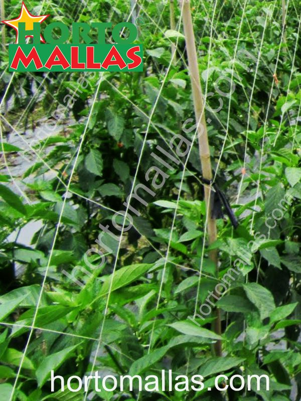 cultivo- fitosanidad