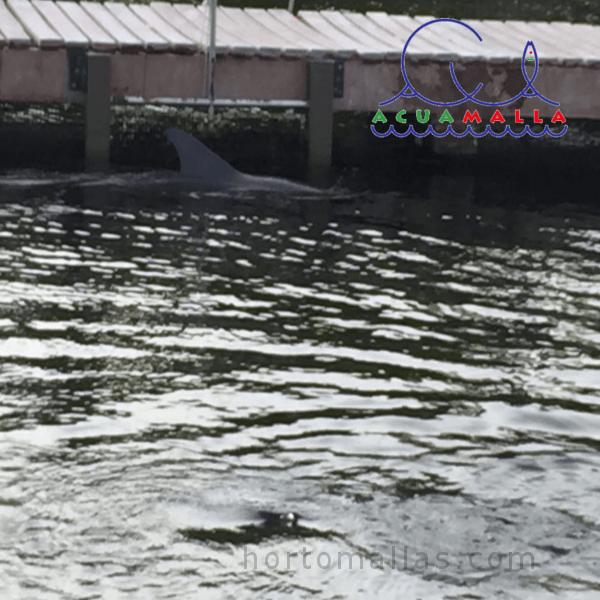 Malla protectora para delfinario