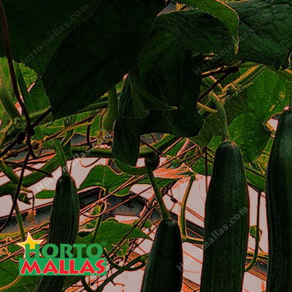 La malla espaldera ayuda a sostener el fruto evitando daños o perdidas en tu cultivo.