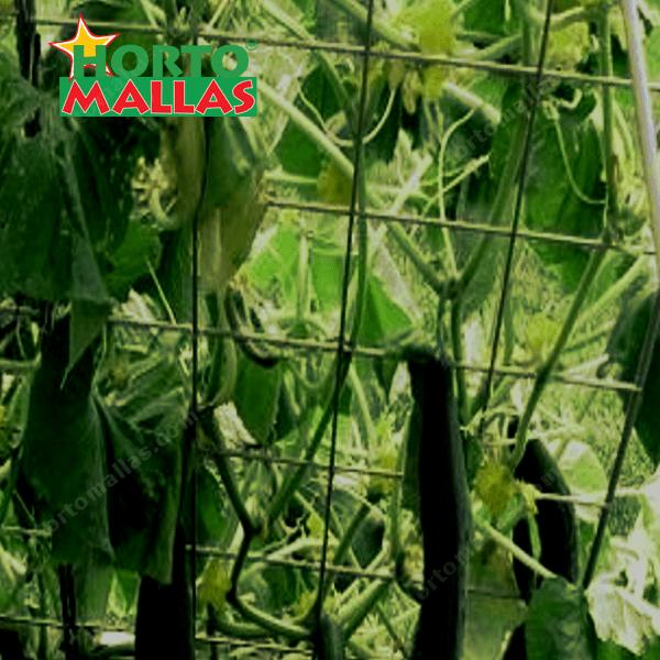 malla espaldera HORTOMALLAS en cultivo de pepino.
