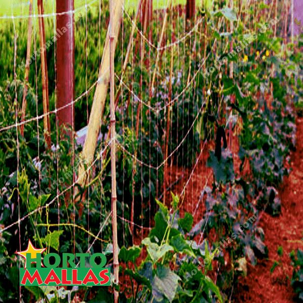 malla espaldera en cosecha de pepinos