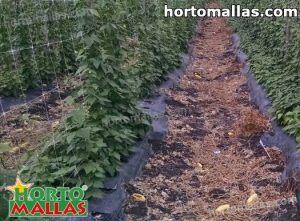 cropfield using trellis net installed on vertical