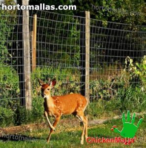 deer fence installed for protect garden