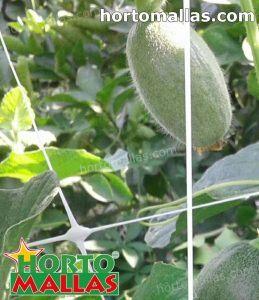 hortomallas trellis support net in pumpkin crops