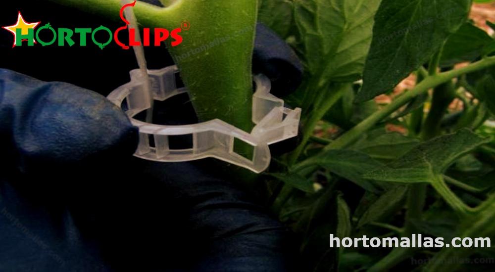 hay que tener cuidado para colocar los clips tomato clips