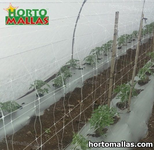 HOW TO GROW AND SUPPORT TOMATO PLANTS USING HORTICULTURE STRINGS