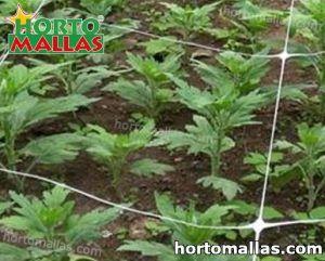 cultivos entutorados con red tutora en vertical