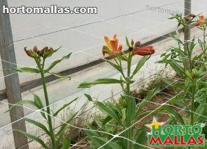 cultivo de flores entutoradas con red tutora hortomallas