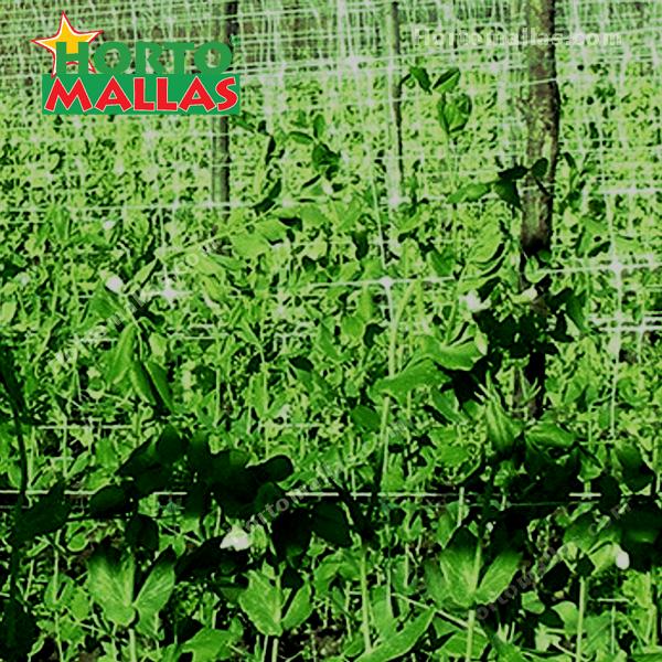instalación de malla espaldera en hortalizas.