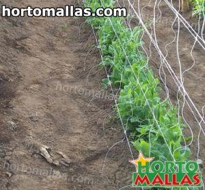 malla hortomallas instalada sobre cultivos