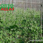 hortomalla para entutorar tomates