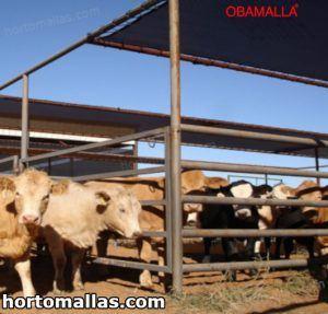 livestock blackout curtain