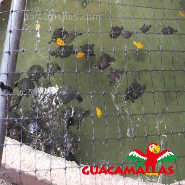 GUACAMALLAS® en estanque de tortugas